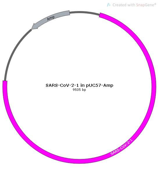 SARS-CoV-2-1