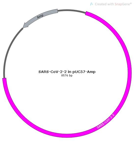 SARS-CoV-2-2